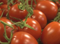 paradajz3