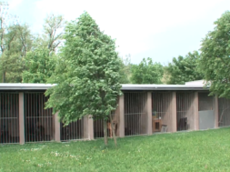 Živali iz zavetišča potrpežljivo čakajo novega lastnika