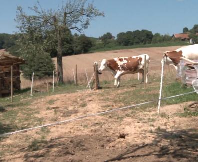 Idilično posestvo, kjer ljudje in živali živijo v sožitju