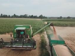 Vse manj slovenske pšenice pristane v slovenskem kruhu. Preverite zakaj