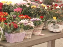Namesto domačega, raje kupujemo tuje cvetje