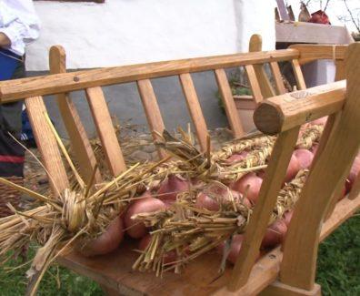 Slovenska avtohtona sorta čebule